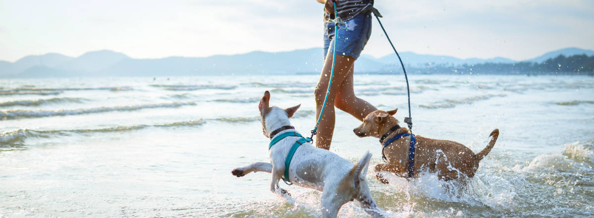 Dog Obedience Training Delaware